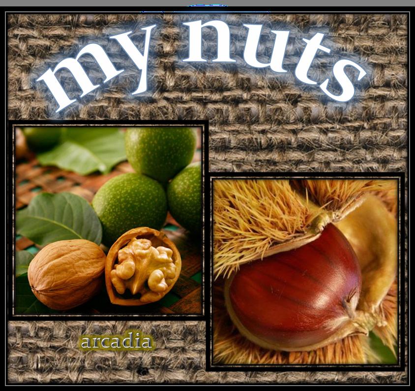 www.mynuts.net